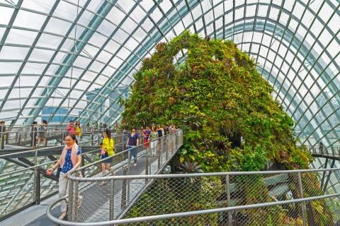 Cloud Forest has an indoor mountain that is flushed with life ...