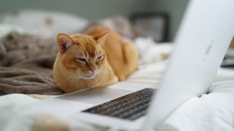 Gato en el ordenador.