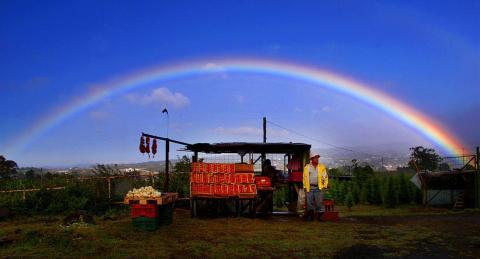 Un granjero de Costa Rica vende tomates frescos al lado de la carretera.