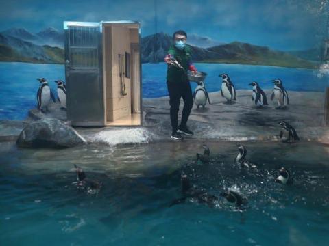 Un empleado con una mascarilla alimenta a los pingüinos del zoológico de Wuhan el 22 de marzo de 2020.
