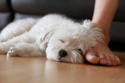 Keep your home environment as peaceful as possible to help active pets calm down.