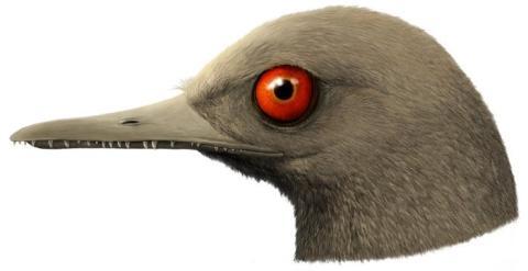 Representación del Oculudentavis.
