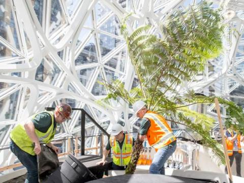 Trabajadores llevando plantas a las esferas.