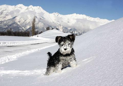 Un perro corre en un campo cubierto de nieve, en un día soleado de invierno, en Austria.