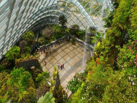 This place is not for working, though. Cloud Forest and another exhibit called Flower Dome are twin exhibits that teach patrons about the diversity of plant life outside of Singapore.