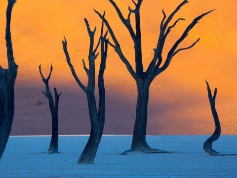Vista de los árboles secos de Deadvlei al amanecer, en el Parque Nacional Namib-Naukluft, Namibia.