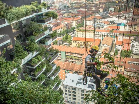 The skyscrapers are covered in more than 700 trees and 90 species of plants. But plants are chosen strategically, and not just in Milan.