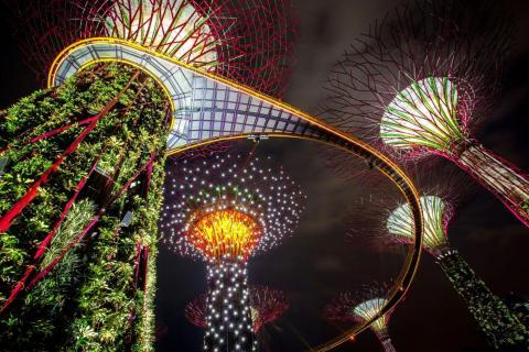 Los súper árboles de Singapur se iluminan por la noche.