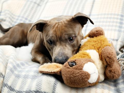 Those who live in small spaces with active animals should use extra-stimulating pet toys.