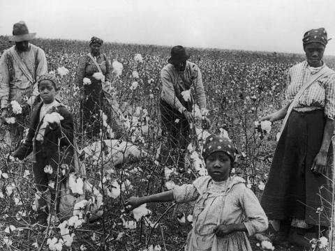Mujeres y hombres recogen algodón en Texas.