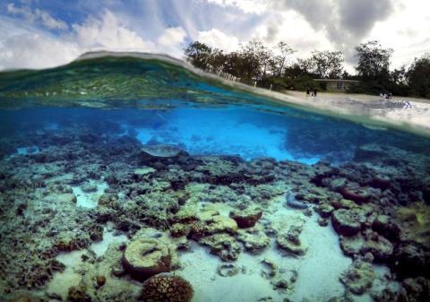 Una tortuga busca alimento en la laguna Lady Elliot Island Eco Resort, ubicada en las afueras de Australia.