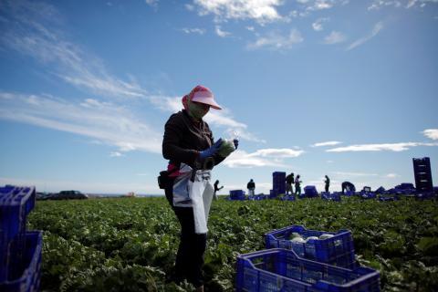 Una trabajadora del campo en una plantación de lechugas en Almería