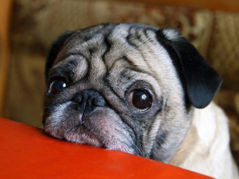 Your pet may be looking for more treats than usual now that you're home often, so remember that scolding your pet for begging can backfire.