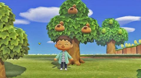 Animal Crossing Bayas