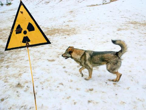 When people were evacuated from Chernobyl in 1986, many left their pets behind thinking that they would soon return. After they were unable to return, Soviet Army soldiers were sent to kill the pets that had been left behind.