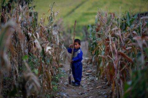 Un niño labrando en un campo de maíz dañado por inundaciones y tifones que forma parte de una granja colectiva de Soska-Ri, En septiembre de 2011, en la provincia norcoreana de Hwanghae del Sur.