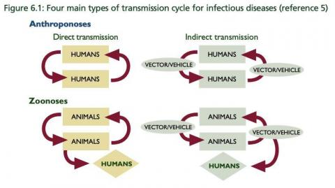 An illustration showing an example of human-to-human disease transmission.