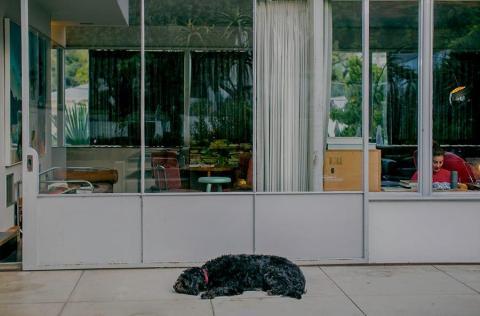 An Echo Park resident.
