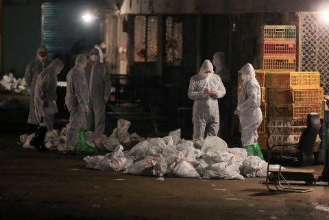 Técnicos con trajes de protección sacrifican aves de corral en un mercado mayorista avícola, donde se detectó el virus de la gripe aviar H7N9 en muestras de palomas, en Shanghai, el 5 de abril de 2013.