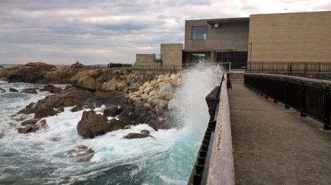 Aquarium Finisterrae.