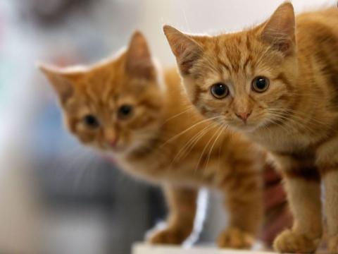 Feline Infectious Peritonitis is a rare disease suffered by cats — and an online black market has emerged around a potential cure