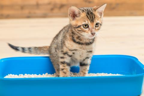 Un gato en su caja de arena