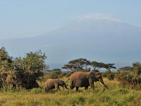 Lo más probable es que veas más de un elefante.