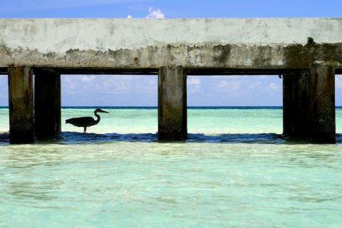 Heron Island (Australia)