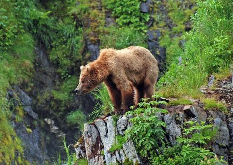 Isla Kodiak, Alaska (EEUU)
