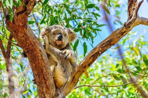 Isla Magnética (Australia)