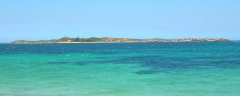 Penguin Island (Australia)