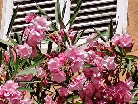 Imagen con la lente principal, con zoom 9x.