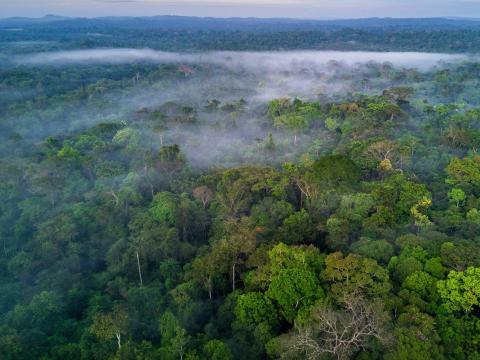 Una de cada 10 especies conocidas en la Tierra se encuentra en la selva tropical del Amazonas.