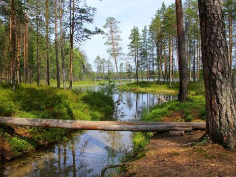 Finlandia tiene muchas cosas sorprendentes.