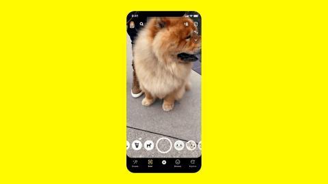 Ahora puedes usar la cámara de realidad aumentada de Snapchat para identificar razas de perros y especies de plantas.