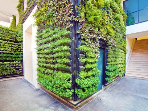3. Nature will be brought inside via living walls and herb gardens