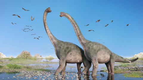 El Brontosaurio es un dinosaurio pero no siempre lo fue.