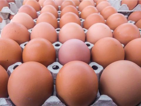 Eggs need consistent temperatures.
