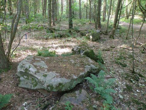 Una gran piedra sarsen en West Woods, el área donde la mayoría de los sarsens de Stonehenge probablemente provenían.