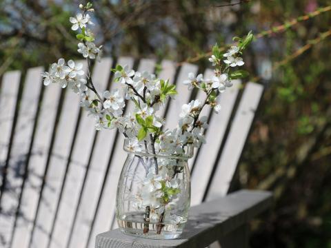 Mientras paseas, puedes tener la suerte de encontrar algunas flores frescas.
