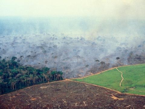 Las 4 etapas de la gestión de la tierra en una gran granja de ganado en la Amazonia brasileña.