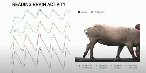 Experimento de Neuralink.