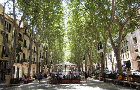 Passeig del Born, Mallorca.