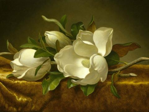Magnolias en terciopelo dorado