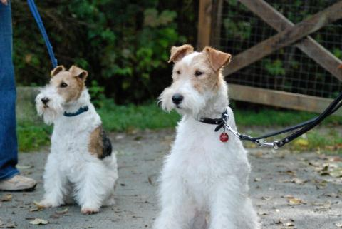 Dos perro compartiendo.