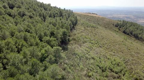 Este bosque es la zona a reforestar en Villanueva de la Sierra, Extremadura