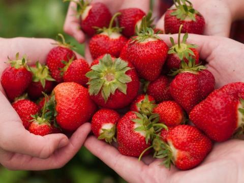 Las fresas pueden prevenir enfermedades crónicas.