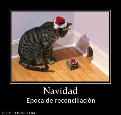 Gato meme Navidad