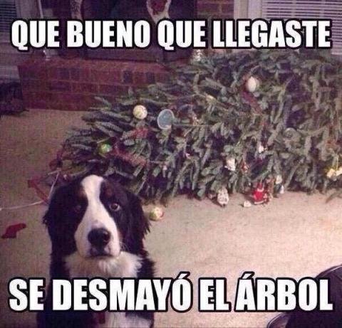 Meme perro árbol