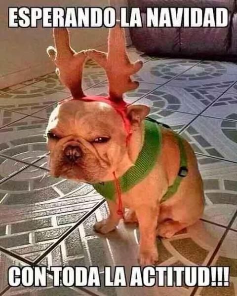 Meme perro Navidad
